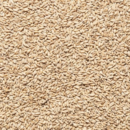 Malt d'épeautre en grains
